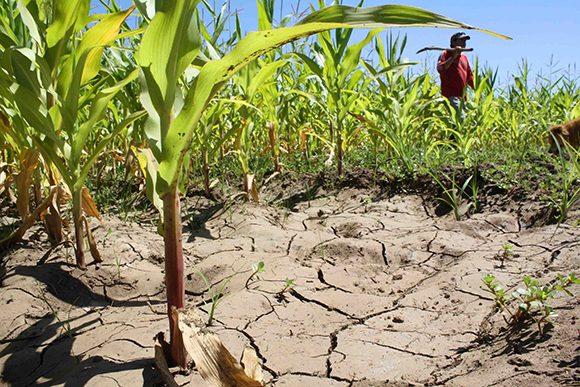 agricultura sequia cambio climatico medio ambiente 580x387