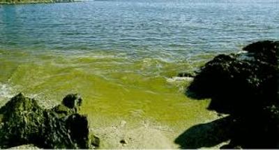 florecimiento de algas