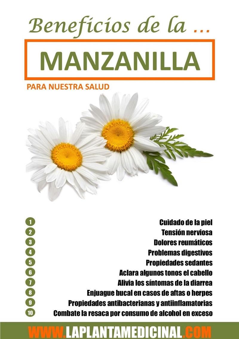 La Manzanilla Un Remedio Natural De Uso Eficaz Durante Siglos