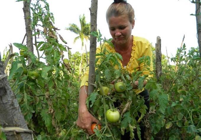 mujeres sector campesino cuba
