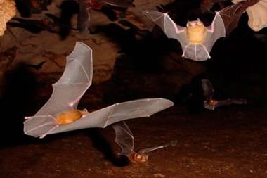 murciélagos en Cuba