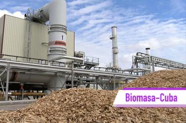 generación de electricidad a través de la biomasa
