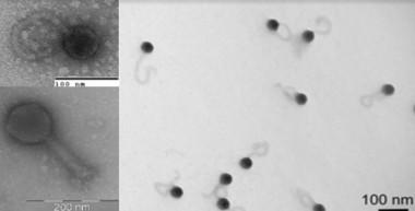 Virus más abundantes en los océanos del planeta