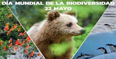 Biólogos, zoólogos, botánicos y especialistas de las ciencias naturales instan este martes al cuidado de la flora y la fauna en ocasión del Día Mundial de la Biodiversidad