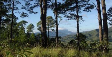 Asciende índice de boscosidad de Cuba