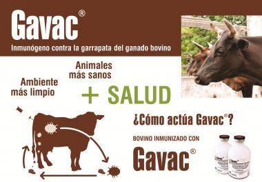 Gavac, vacuna cubana contra la garrapata de ganado bovino