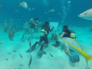 Sandor González: El artista cubano que pinta bajo el agua
