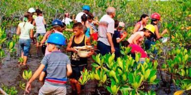 Niños y adolescentes integrantes del proyecto Ecoarte plantan mangles en el municipio holguinero de Moa (Foto: radioangulo.cu)